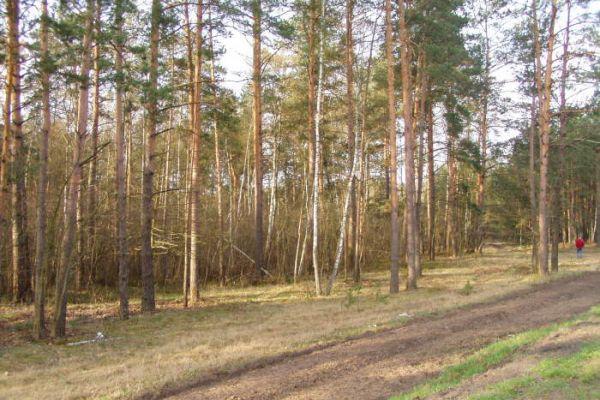 bielorussia5B18025C5-193D-5552-0568-0A1B8BA91573.jpg